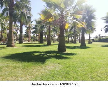 Palmtree on an exotic summer vacation location in Turkey.