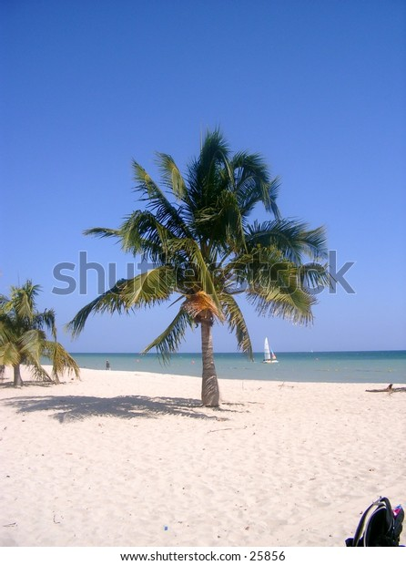 A palmtree on a tropical beach