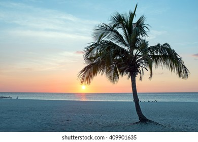 Palmtree at Palm Beach in Aruba at sunset in the Caribbean