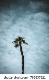Palmtree and the sky