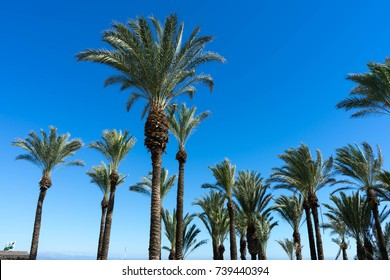 Palmtrees in the blue sky.