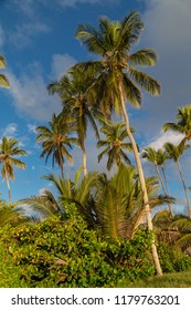 Palmtrees in the caribbean