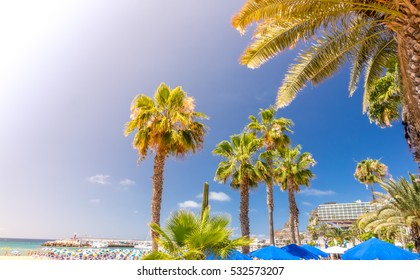 Palmtrees on the beach in the PuertoRico, Gran Canaria, Canary Islands, Spain