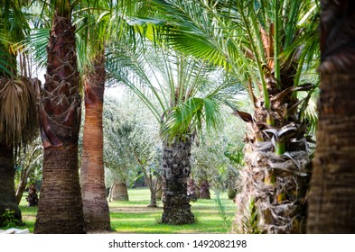 Palmtrees on a beautifull island on vacation