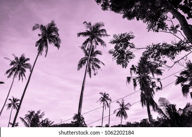 palmtrees rising in the pink sky