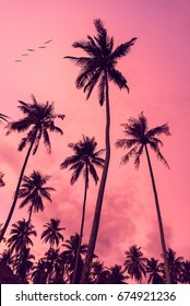 palmtrees sunset