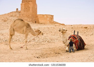 Palmyra, Syria - March 18, 2011: A child playing with the camels at Temple of Bel, Palmyra, Syria