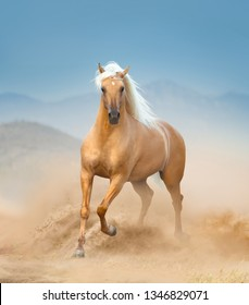 The palomino andalusian horse running in desert