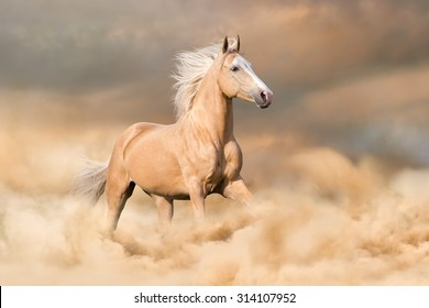 Palomino horse with long blond male run in dust