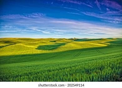 Palouse fields in sunset