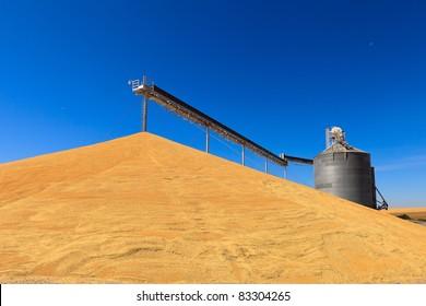 Palouse Harvest Season