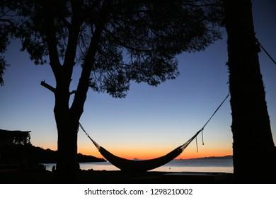 pamls and hammock in summer