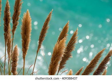 Pampas Grass in front of the glittering turquoise pacific ocean of Big Sur, California