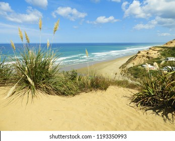 Pampas grass overlooks coastal cliff in Baylys Beach, New Zealand