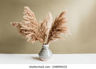 Pampas grass in vase against green wall.