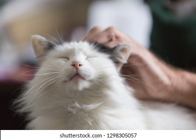 Pampered Cat Family Pet Emotional Support Animal in the lap of an elderly man