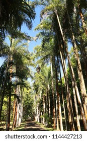 Pamplemousses Botanical Garden, Mauritius.