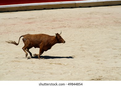PAMPLONA, SPAIN - JULY 13: Bullfighting free festival that is celebrated in the parties in honor to San Fermin (Sanfermines celebrations) on July 13, 2009 in Pamplona, Spain.