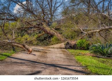 Panama City Florida, United States. 10-11-2018. Damaged concrete driveway from uprooted oak tree