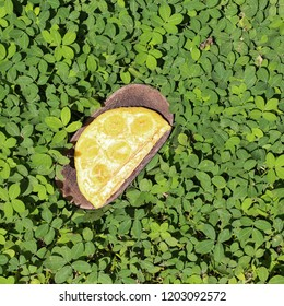 Pancakes with banana on wooden plate closeup. Flapjack with piece of banana on green leaf background. Eggless pancakes with banana in Asia Thai. Indonesian pancake traditional culinary. Space for text