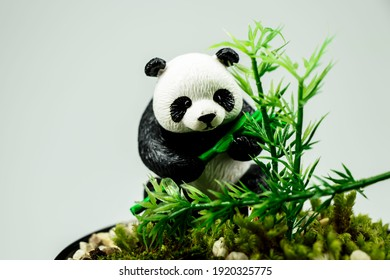 Panda is looking for food. A panda's daily diet consists almost entirely of the leaves, stems and shoots of various bamboo species.