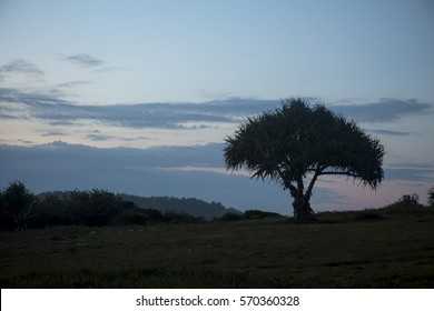 Pandamus Tree in Silhouette. Looking away from the setting sun the hinterland at Cabraritta beach is fast disappearing into the evening. A slight pink behind the pamdanus tree lightens the image.