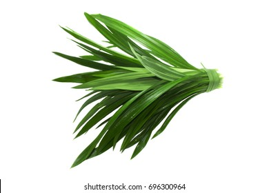 Pandan isolated on a white background .