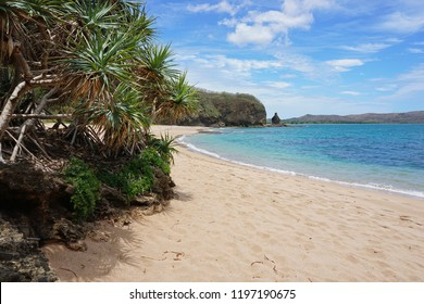 Pandanus on the beach shore in New Caledonia, Bourail, Grande Terre, south Pacific, Oceania