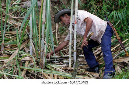 Panela Sugarcane, panela pulverizing plant, Cisnero, Antioquia, Colombia, which exports this product to several Uropa countries, September 2013