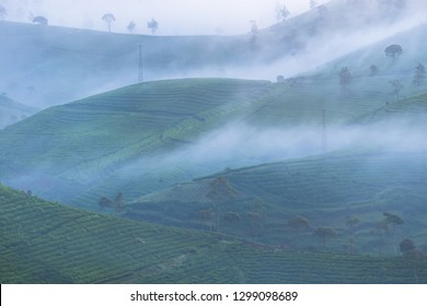 Pangalengan Tea Plantation in the foggy morning, West Java, Indonesia