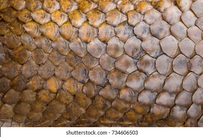 Pangolin skin,scale, texture. Abstract background