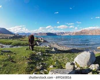 Pangong Lake is the highest and Biggest Salt Lake, located in North India.