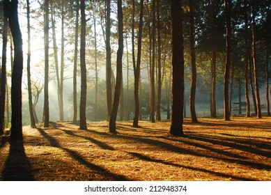 Pang-ung, Pine forest in Thailand