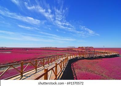 Panjin red beach, Liaoning, China