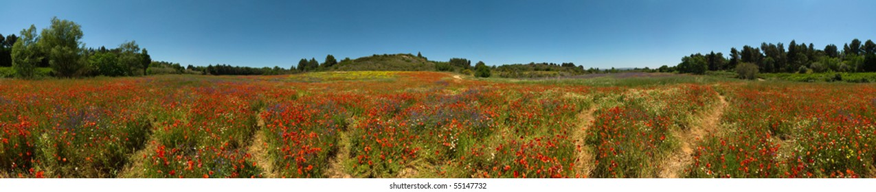 Panorama 360 degrees to a wild poppy field