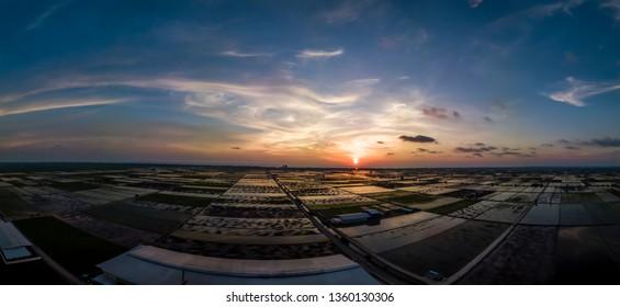 Panorama Aerial view of famous padi field during sunset Sekinchan Selangor, Malaysia