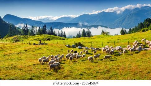 Panorama of the alpine pastures in the Slovenian. Julian Alps. Triglav National Park.