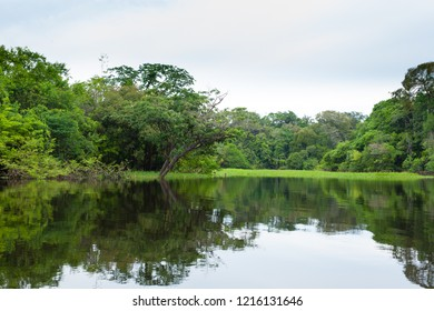 Panorama from Amazon rainforest, Brazilian wetland region. Navigable lagoon. South America landmark. Amazonia