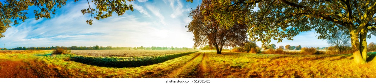 Panorama of an autumn landscape with fields and trees