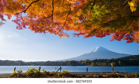 panorama of autumn red maple leaves mount Fuji