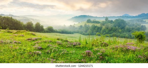 panorama of beautiful foggy morning in mountains. purple thyme flowers on the grassy meadow. high mountain in the distance. wonderful landscape