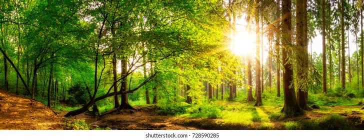 Panorama of a beautiful forest with bright sun
