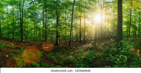 Panorama of a beautiful forest at sunrise