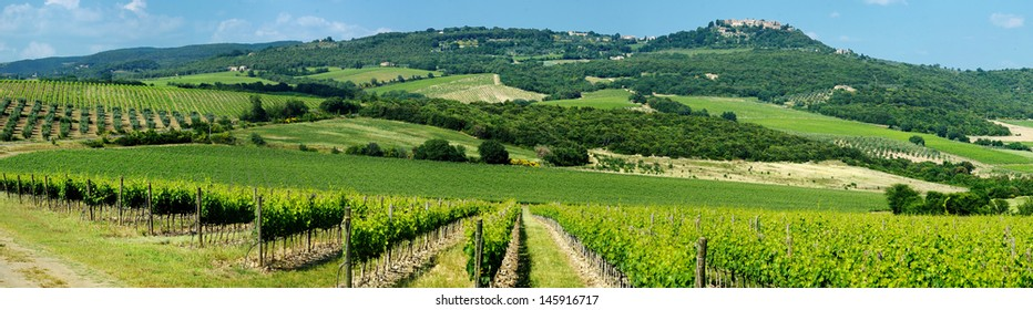 Panorama of beautiful wine fields in Italy