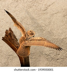 Panorama of an big Eagle Owl. Sit on a stump. Spread the wings for takeoff. Bird looks back, the orange eyes stare at you. Beautiful sand in the background. Composite photo. Cover, social media or web