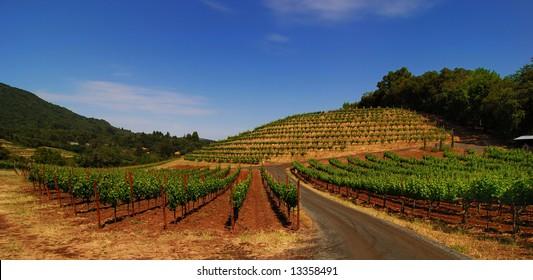 Panorama of biodynamic vineyard in Sonoma California