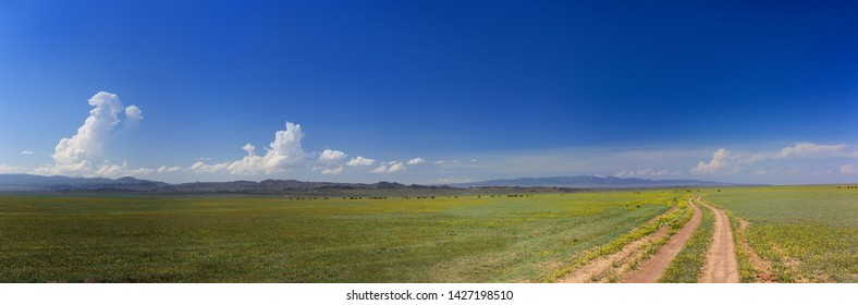 Panorama of the blooming steppe. The road, the mountains on the horizon, the clouds.