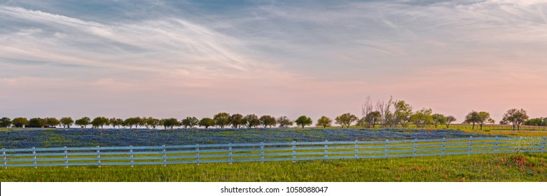 Panorama of a Bluebonnet Field in Chappell Hill Washington County - Brenham Texas
