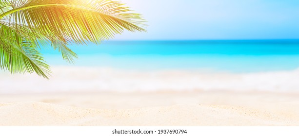 Panorama of blurred blue sky and leaves of coconut palm tree on white beach. Landscape of tropical summer. Summer beach vacation concept.
