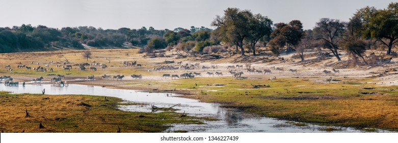 Panorama - BOTETI RIVER, the last oasis in the drought, Makgadikgadi National Park, Botswana